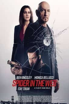 Spider in the Web 2019